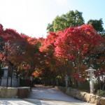 秋の御聖地