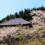 春の御聖地